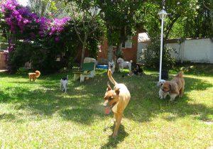 Hotel para cachorros Porto Alegre