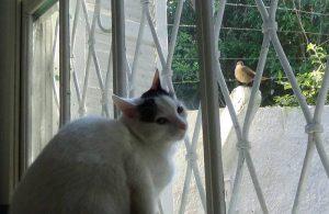 Hotel para gatos, gatil Porto Alegre
